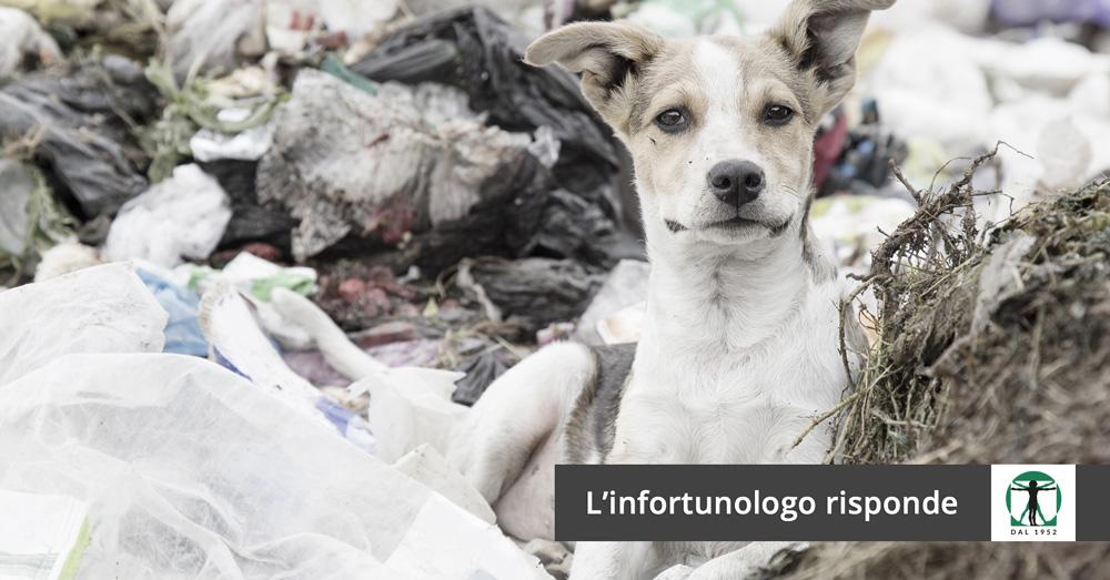 cane randagio articolo del blog, Infortunistica Tossani