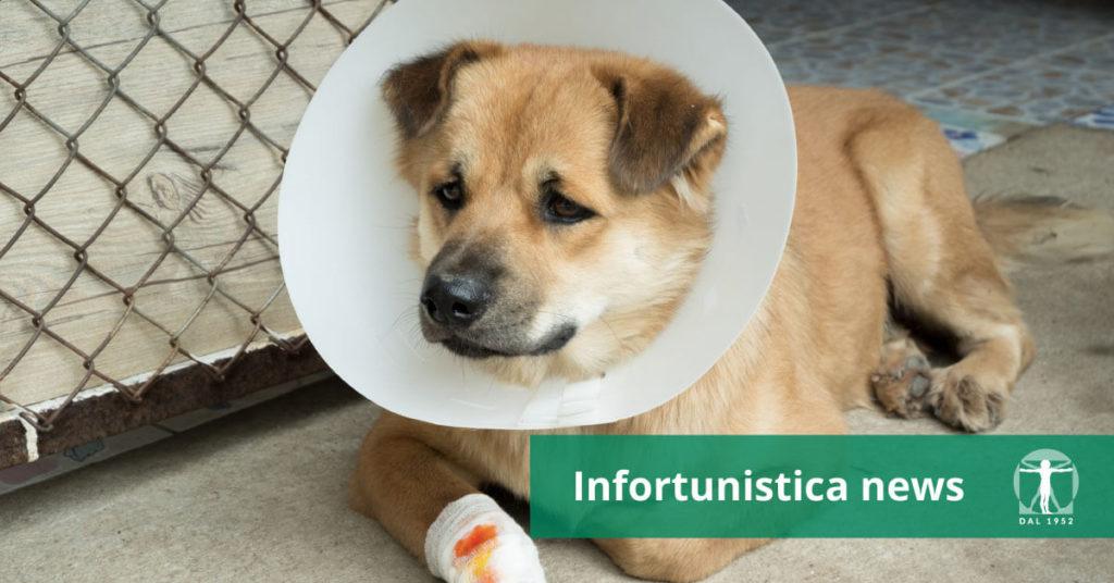 Cane ferito con collare elisabettiano, Infortunistica Tossani